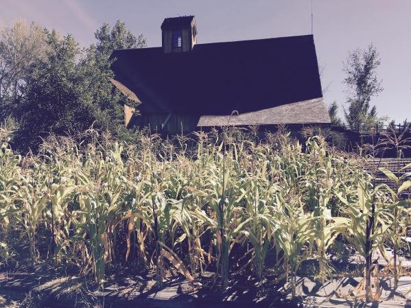 Wheeler Farm- Pumpkin Days