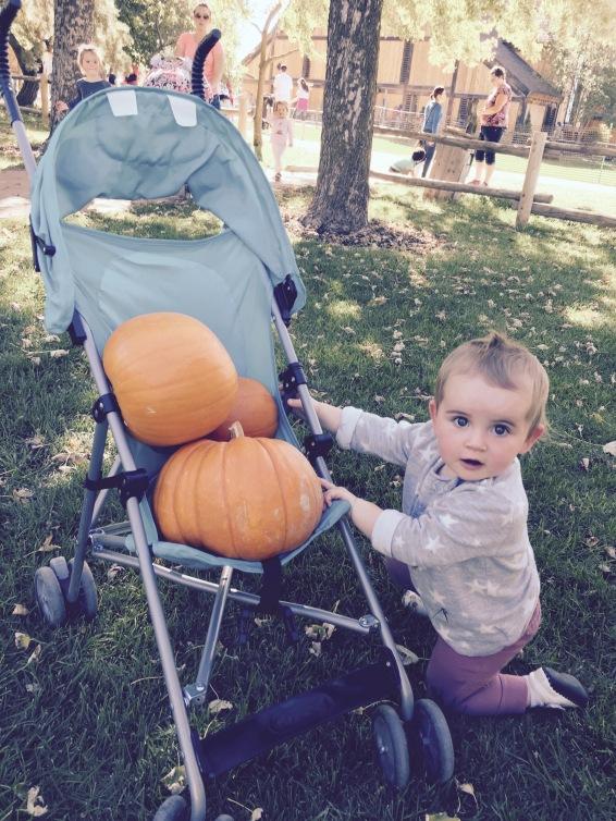 Stash of Pumpkins - Rose at Wheeler Farms