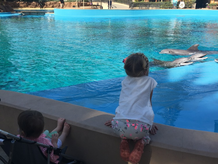 Three Whims: The Mirage Dolphin Encounter